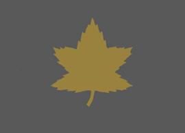 Image : 4ème division d'infanterie