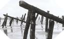 """Images : Les """"Asperges de Rommel"""", poutres de bois devant éventrer les engins de débarquement"""