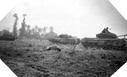 Images : Des chars Churchill appartenant au 31st Tank Battalion