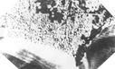 Image : Photo de la Pointe du Hoc bombardée, prise à partir d'un avion de reconnaissance Allié