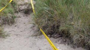 Des munitions découvertes près de Sainte-Mère-Eglise