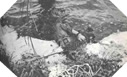 Image : Opération Boston - Opérations aéroportées américaine en Normandie le 6 juin 1944